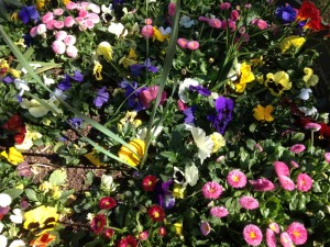 Spring flowers closeup. jpg