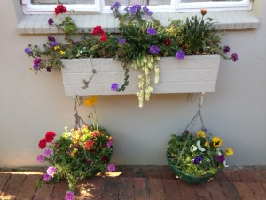 Window Box & baskets